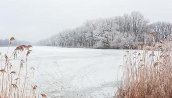 Winter time in forest lake
