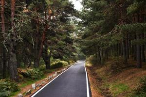 Highway in the forest photo