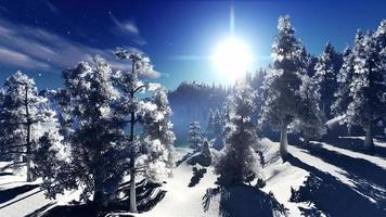 bosque de christmac en las montañas