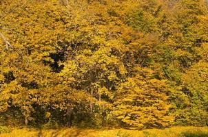 Golden forest trees scene