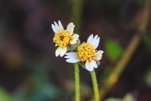 belle fleur sauvage en forêt
