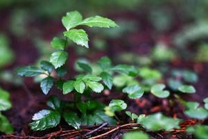 green leafs on forest floor photo