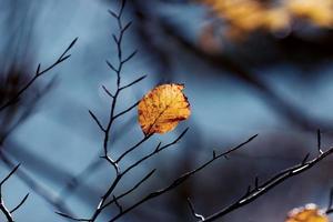 hermoso otoño, hojas en el bosque 5 foto