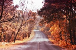 Vintage picture of autumn forest photo