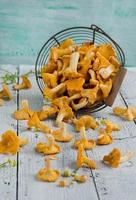 Forest chanterelle mushrooms in a basket