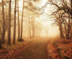 Misty forest in autumn with trees