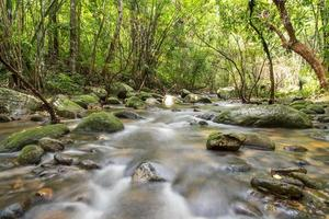 River deep in mountain rain forest. photo