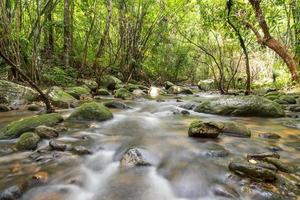 rivière au fond de la forêt tropicale de montagne.