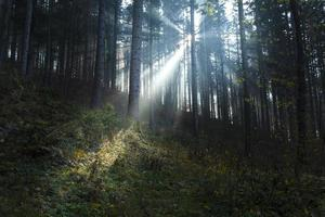Surreal light beam in the forest