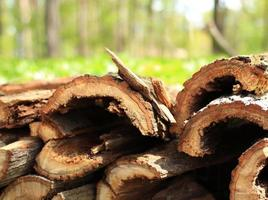 Stacked firewood in the forest background