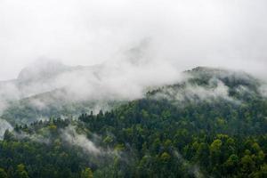 bosque de montaña en cloudscape-pirineos francia