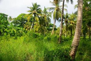 Green Palm Forest in Colombian Island Mucura photo