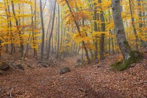 paisaje forestal con niebla en las montañas de Crimea foto