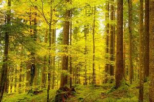 Golden autumnal forest photo
