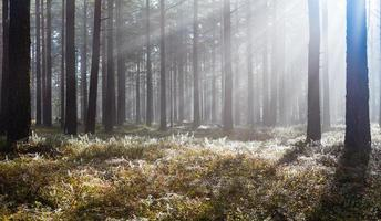 Morning in forest photo