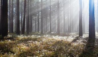 mañana en el bosque