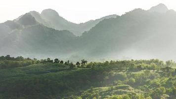 Valle del bosque de montaña de niebla