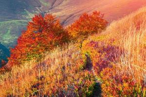 Colorful autumn sunrise in the mountain forest.