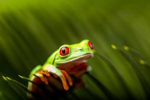 Rain forest tropical theme with colorful frog photo