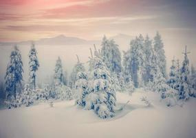 bosque brumoso en las montañas de invierno.