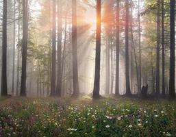 bosque mágico de los cárpatos al amanecer