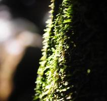 Soft-focus Moss in forest,