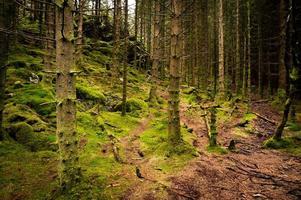 caminando por el bosque cubierto de musgo