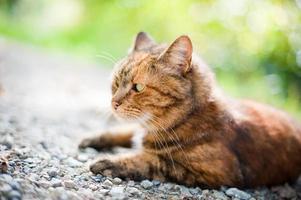 gato en la naturaleza foto