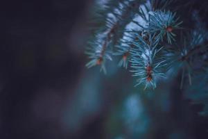árvore de peles