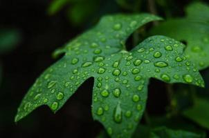 Water Drops on Leaf in Angeles National Forest