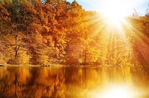 bosque de otoño en la orilla del lago