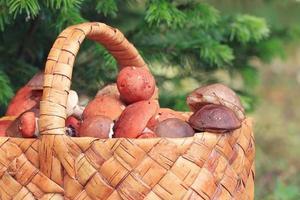 Basket with mushrooms autumn forest sun rays photo