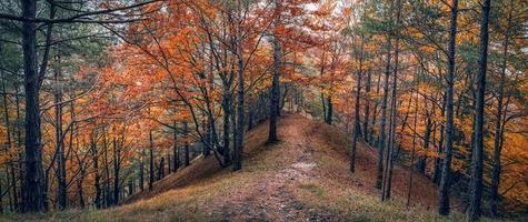 Autumn forest panorama in Tatra mountains photo
