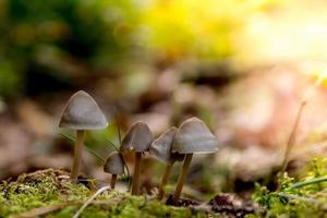 mushroom in the fall in the forest photo