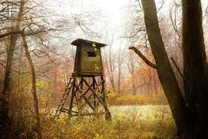 púlpito de caza en el bosque al amanecer, Polonia.
