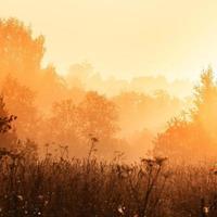 Morning mist over the forest, summer morning.