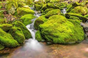 Small forest stream near Third Vault Falls photo