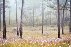 Misty forest with flowers on the ground