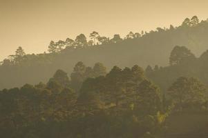 bosque de montaña tropical en la mañana