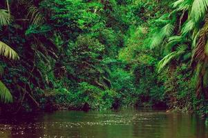 River deep in jungle forest. Amazonas composition. photo