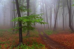 Tree guarding trail in misty forest