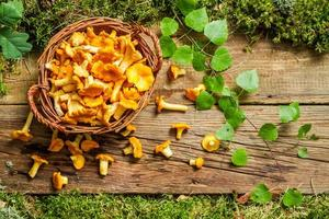 Freshly harvested mushrooms in the forest photo