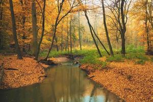Flowing stream on colorful autumn forest photo