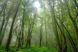 pluie de forêt tropicale
