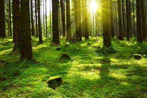 verano en el bosque.