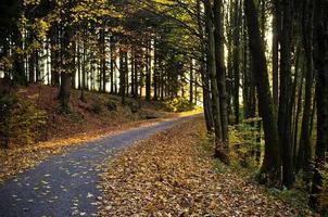 estrada na floresta escura