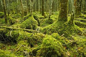 bosque de musgo en japón foto