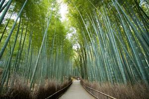 Bamboo Forest, kyoto Japan photo