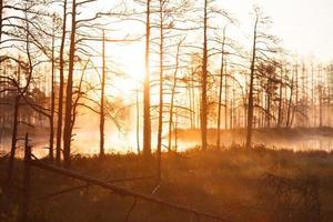 amanecer cerca del lago del bosque