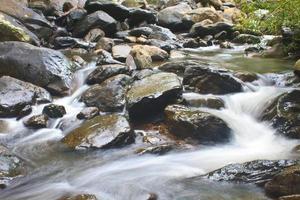 cascade de la nature dans la forêt profonde